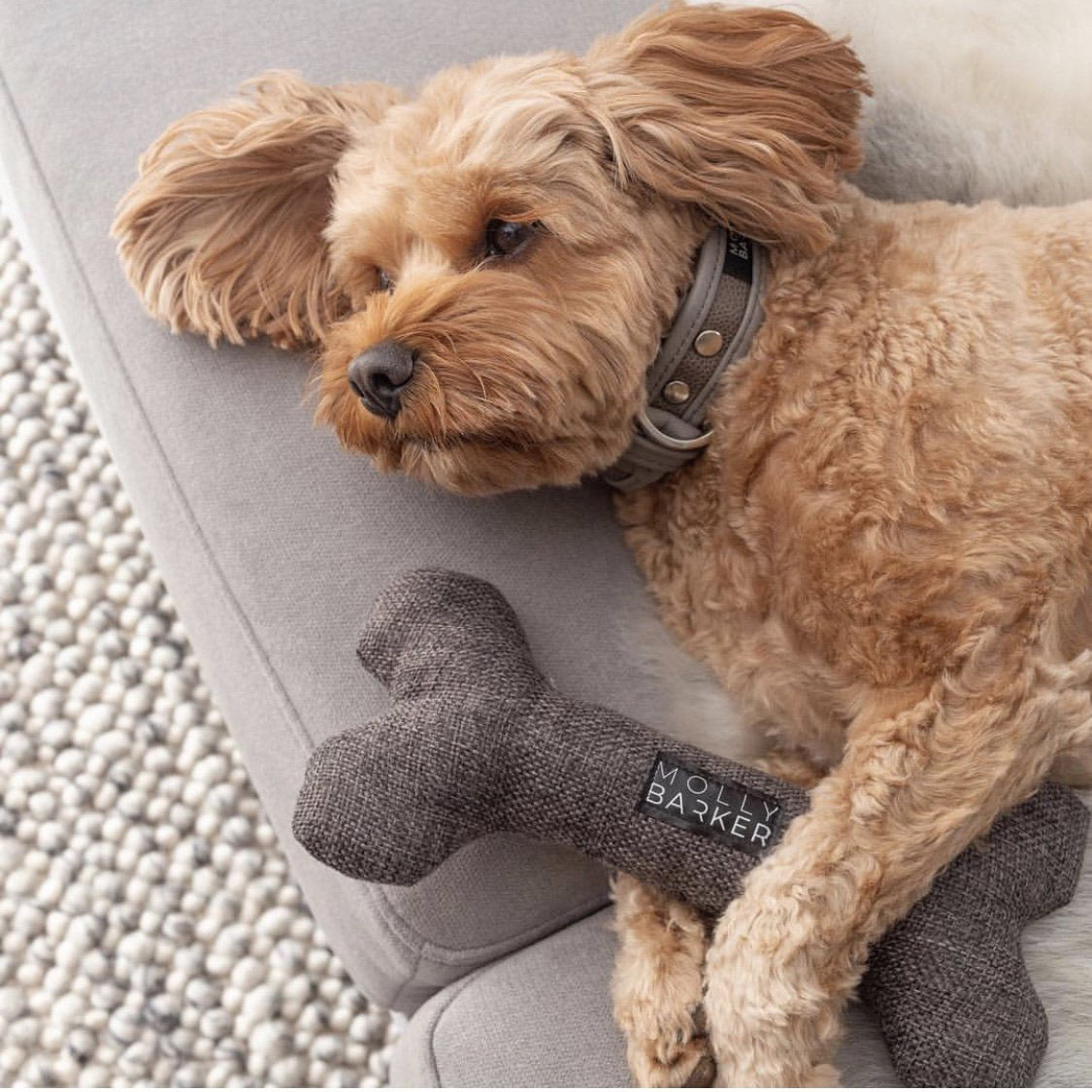 Sophisticated Dog Gear + Toys by Molly Barker